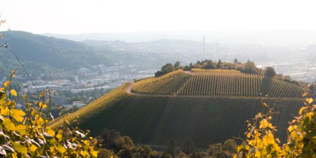 PIA DYMATRIX: Standort Stuttgart Weinberge